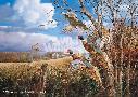 David Maass October Memories - Pheasants