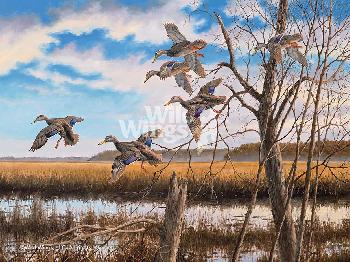 David Maass Pride of the East - Black Ducks Giclee on Canvas