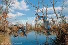 David Maass Reflections of Autumn