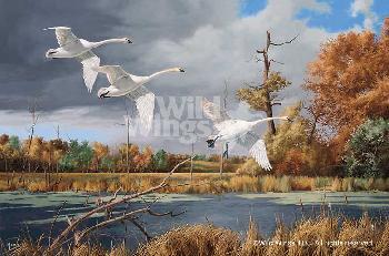 David Maass Autumn at Baker - Trumpeter Swans Artist