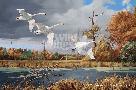 David Maass Autumn at Baker - Trumpeter Swans