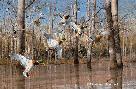 David Maass Waterfowling Hot Spots - Mallards