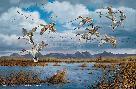 David Maass Waterfowling Hot Spots - Pintails