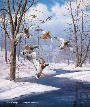 David Maass Winter Wonder - Mallards Remarque on Paper