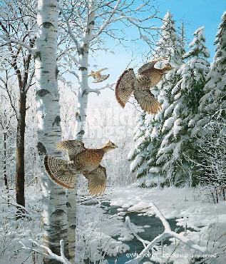 David Maass Winter Wonder - Ruffed Grouse