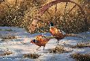Rosemary Millette Heartland Heritage - Pheasants