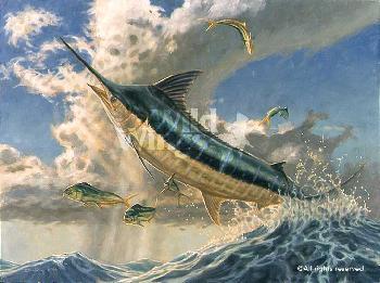 Don Ray Flying Fish - Marlin