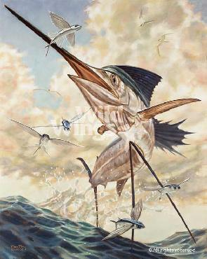 Don Ray Flying High - Sailfish Artist