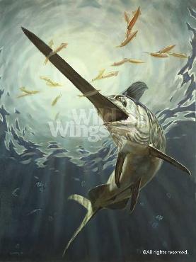 Don Ray Night Life - Swordfish