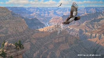 Michael Sieve Bright Angel - Condor Premier Canvas Print