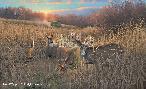 Michael Sieve Harvest Time - Whitetail Deer