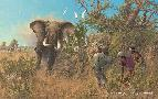 Michael Sieve Ivory Hunter II - Elephants
