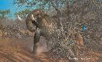 Michael Sieve Rolling Thunder -  Elephant