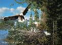 Michael Sieve Spring - Bald Eagles