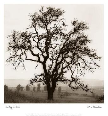 Alan Blaustein Country Oak Tree