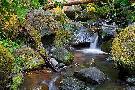 Michael Broom Mossy Stream