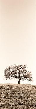 Alan Blaustein Lone Oak Tree Canvas