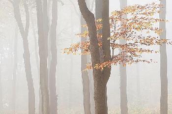 Wilco Dragt Arnhem Park Zypendaal Canvas