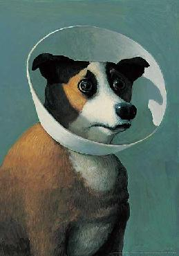 Michael Sowa Dog With Cone