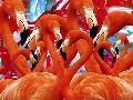 Ata Alishahi Red Flamingo Family
