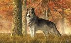 Daniel Eskridge A Wolf In Autumn