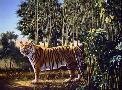 D. Rusty Rust Hidden Tiger