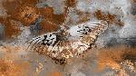 Fernando Palma Butterfly II
