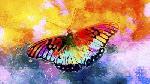 Fernando Palma Butterfly III