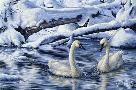 Jeff Tift Tundra Swans
