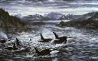 Jeff Tift Whales