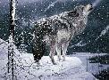 Jeff Tift Lone Wolf