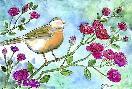 Jennifer Zsolt Robin Roses