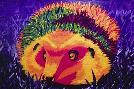 Lucy Loo Wales Colorful Hedgehog