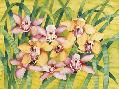 Mary Russel Winter Orchids