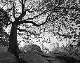 Monte Nagler Central Park #1, New York, New York 05