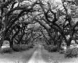 Monte Nagler Path In The Oaks #2, Louisiana