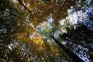 Robert K. Jones Autumn Trees