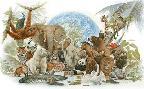 Tim Knepp Animal Kingdom