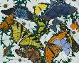Tim Marsh Butterfly Collage
