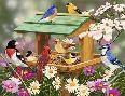 William Vanderdasson Backyard Birds Spring Feast