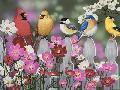 William Vanderdasson Song Birds And Cosmos