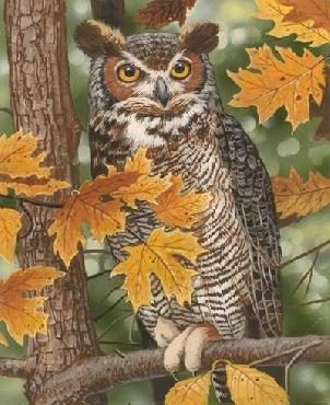 William Vanderdasson Autumn Owl Canvas
