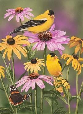 William Vanderdasson Golden Finches