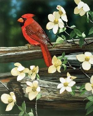William Vanderdasson Cardinal