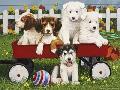 William Vanderdasson Puppy play Date
