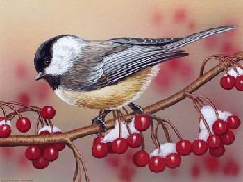 William Vanderdasson Chickadee With Berries