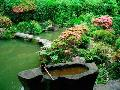Shin Terada Green Zen Garden, Kyoto, Japan