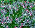 John Barger Wildflowers Near The Redwood Np