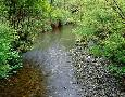 John Barger Prairie Creek, California