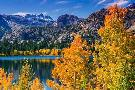 Russ  Bishop Golden Fall Landscape At June Lake